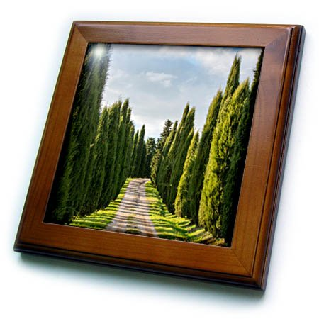 - 3dRose Danita Delimont - Roads - Italy, Tuscany, Long Driveway lined with Cypress trees - 8x8 Framed Tile (ft_277692_1)