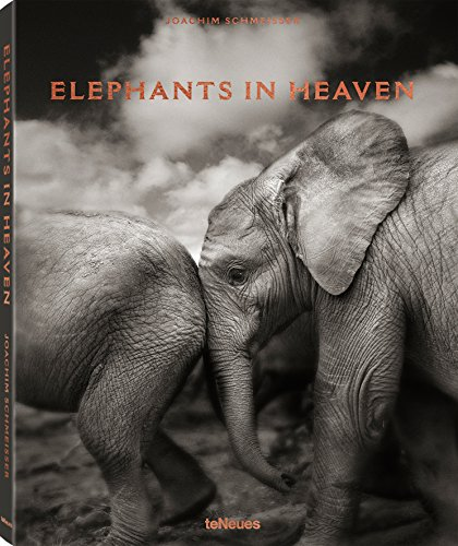 "Because elephants are pachyderms, a combination of two Greek roots meaning ""thick skin,"" one might think that nothing bothers them and that they lead quiet, safe lives. Nothing could be further from the truth: elephants have been hunted and killed fo..."