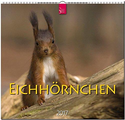 eichhrnchen-original-strtz-kalender-2017-mittelformat-kalender-33-x-31-cm