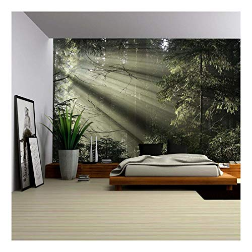 Lights Wallpaper Mural - wall26 - Sun Light Shining Through the Trees. Carpathians Wood, Ukraine. - Removable Wall Mural | Self-adhesive Large Wallpaper - 66x96 inches