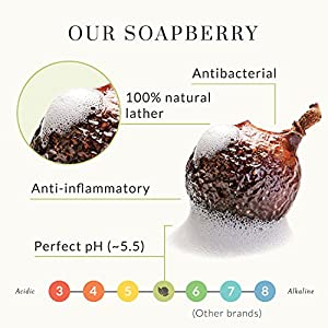 Real, Organic Body Wash For Oily Skin, The Only pH 5.5 Balanced Peppermint Body Wash For Sensitive Skin Types – Natural Body Soap For Women, Men And Kids. With Fresh Eco-Friendly Wild Soapberries