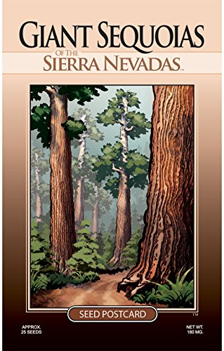 Sequoia Tree Seed Packet - Enjoy The Natural Beauty of The Giant Sequoias (Giant Sequoia Tree)
