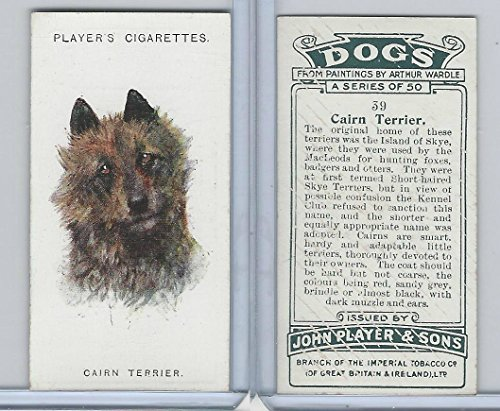 P72-90 Player Tobacco, Dogs, 1929, 39 Cairn Terrier