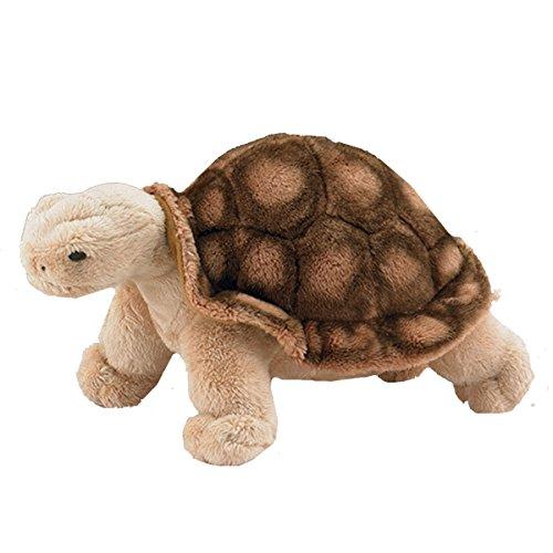 Tortoise 6 5 Wild Life Artist product image