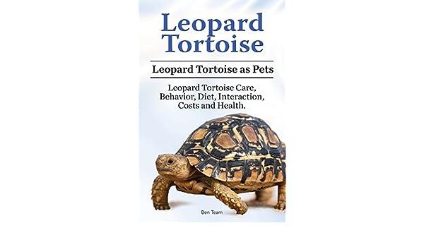 Leopard Tortoise Pets. Leopard Tortoise Behavior, Diet, Care ...