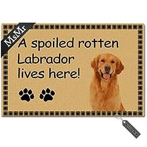 MsMr Felpudo para Entrada Alfombrilla de Suelo a Spoiled Rotten Labrador Vive aquí. Interior Ourdoor Felpudo Non-Woven Fabric Top 23,6x 15,7Pulgadas