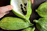 Caigua 10 Seeds (Pronounced Kai-wa) Ediblefruit, Seeds, and Leaves.very Rare Cucumber