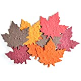 """Bloomin Seed Paper Shapes Packs - Maple Leaf Shapes - 100 Shapes Per Pack - 3x3"""" {Color Mix}"""