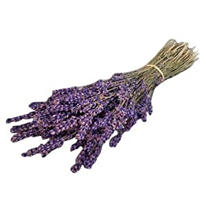 LARGE BUNCH PROVENCE LAVENDER FLOWERS DRIED FLOWER BOUQUET 300 STEMS FRAGRANT WEDDING CRAFTS DECORATION by Harrington Marley