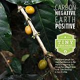 Tiny Footprint Coffee Organic Fair Trade Nicaragua Segovia Dark Roast, Ground Coffee, 1 Pound