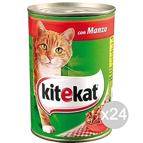 Kitekat Juego 24 Gato Bocconi Manzo 410 g Comida para Gatos: Amazon.es: Productos para mascotas