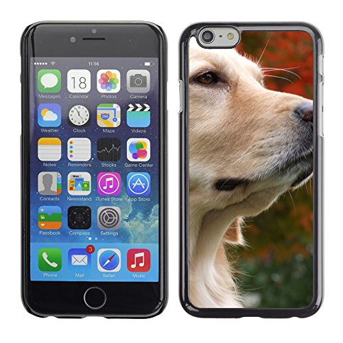Premio Sottile Slim Cassa Custodia Case Cover Shell // V00003913 golden retriever réfléchie // Apple iPhone 6 6S 6G PLUS 5.5""