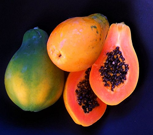 Papaya Strawberry - 50+ Very Fresh! Strawberry Papaya! tropical fruit tree seeds plant VERY EASY!