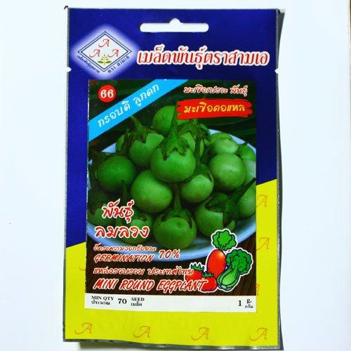 MINI ROUND EGGPLANT VEGETABLE SEEDS 1 GRAM 70 SEEDS HERB FOR HEALTH THAI FOOD