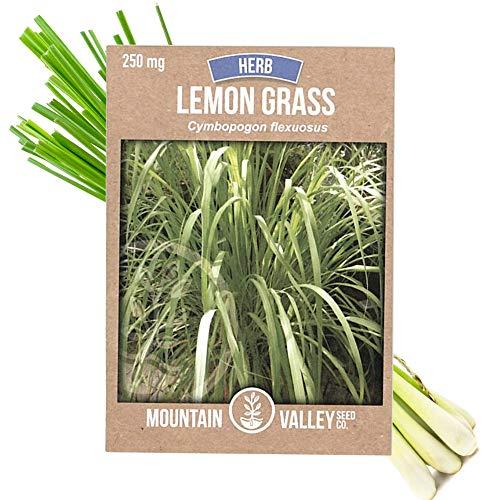 (Lemon Grass Seeds for Planting Outdoor | 250 Mg Packet | Non-GMO, Heirloom Culinary Herb Garden Lemongrass Seeds | Cymbopogon flexuosus)