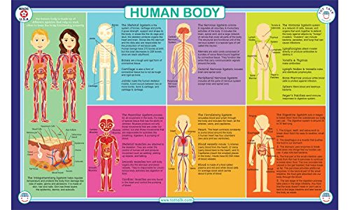 Human Body Placemat (Tot Talk Human Body Educational Placemat for Kids, Washable and Long-Lasting)