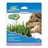Kitty Cat Grass Kit, My Pet Supplies