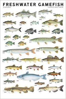 Freshwater Gamefish Of North America Poster Joseph R