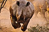 "Rhino Coming - Art Print On Canvas Rolled Wall Poster Print - 36""x24"" (90x60cm) - Unframed"