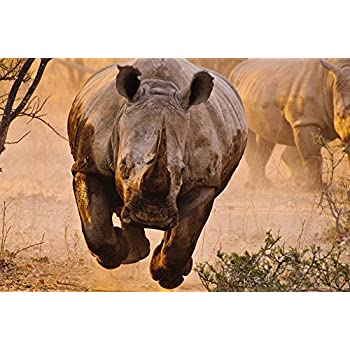 Rhino Coming - Art Print On Canvas Rolled Wall Poster Print - 36