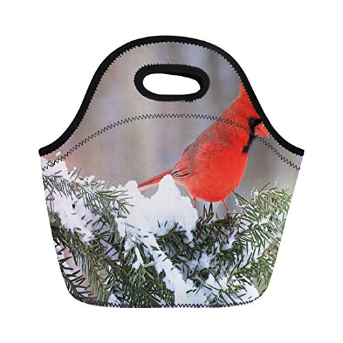 Semtomn Neoprene Lunch Tote Bag Red Beautiful Male Northern Cardinal Cardinalis on Snowy Spruce Reusable Cooler Bags Insulated Thermal Picnic Handbag for Travel,School,Outdoors,Work