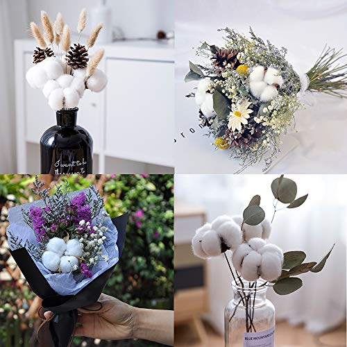 Cewor 20pack Really Natural White Cotton Stems Dried Flower Branch For Farmhouse Style Antique Floral Furniture Wedding Decoration Cotton Stems Amazon In Toys Games