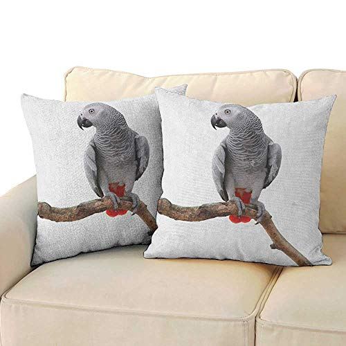 RenteriaDecor Grey,Pillow African Parrot Bird Psittacus Erithacus Standing on a Branch Tropical Nature Wildlife 14