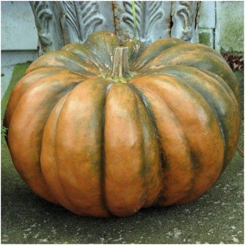 (Package of 40 Seeds, Fairytale Pumpkin Seeds (Cucurbita moschata) )