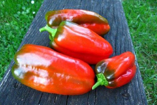doux-d-espagne-sweet-pepper-10-seeds-rare