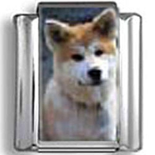 Akita Dog Photo Italian Charm