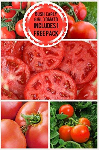 Bush Early Girl Hybrid Tomato 200 Seeds UPC 658921943755 Includes a Free Pack (Black Krim Tomato)