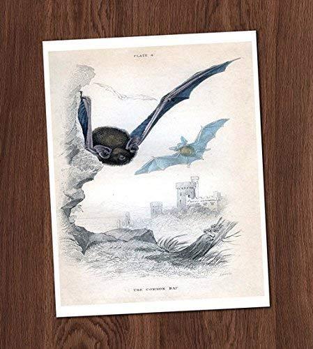 Common Bat Flying Castle Vintage Book Illustration Art Print 8x10 Halloween Vampire Wall Art Decor