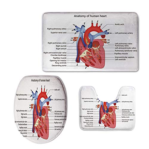 iPrint Fashion 3D Baseball Printed,Educational,Medical Structure of The Hearts Human Body Anatomy Organ Veins Cardiology,Coral Red Blue,U-Shaped Toilet Mat+Area Rug+Toilet Lid Covers 3PCS/Set by iPrint