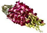 Fresh Cut Flowers - 10 Purple Orchids Dendrobium (Wholesale Pack of 10 Stems, Variegated Bom)