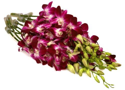 (Fresh Cut Flowers - 10 Purple Orchids Dendrobium (Wholesale Pack of 10 Stems, Variegated)