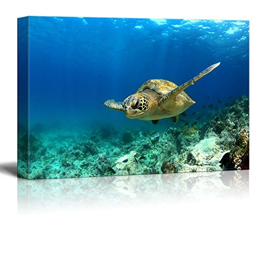 Green Sea Turtle Swimming Underwater in Deep Ocean Sea Wall Decor ation