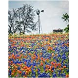Texas Bluebonnets and Indian Paintbrush Wildflowers - 11x14 Unframed Photo Art Print - A Great Gift for Texans or Anyone Who Loves Flowers - Living Room Dorm Game Bedroom