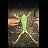 Sapo In My Soul: The Matsés Frog Medicine