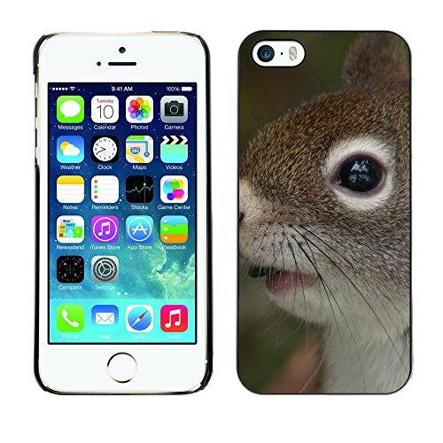 Premio Sottile Slim Cassa Custodia Case Cover Shell // F00011832 Red Squirrel // Apple iPhone 5 5S 5G
