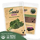Organic Kale Seeds (APPR. 500) Vates Kale - Heirloom Vegetable Seeds - Certified Organic, Non-GMO, Non Hybrid - USA