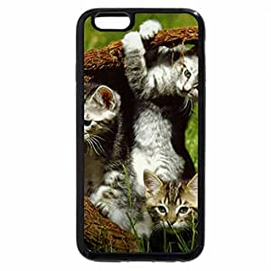 iPhone 6S Plus Case, iPhone 6 Plus Case, Four Kittens in a basket
