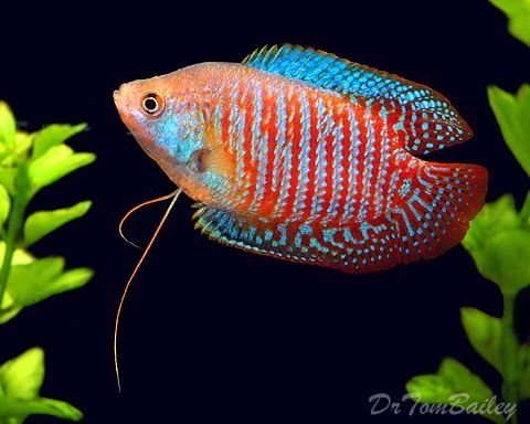 neon fish - 3