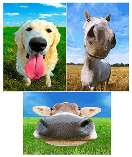 3 different images of CLOSEUP and PERSONAL animals - Dog, Horse and Cow - 3D Lenticular Postcard Greeting - Postcard Cow