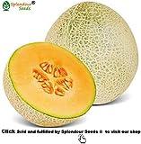 Splendour Seeds ® Muskmelon Seeds