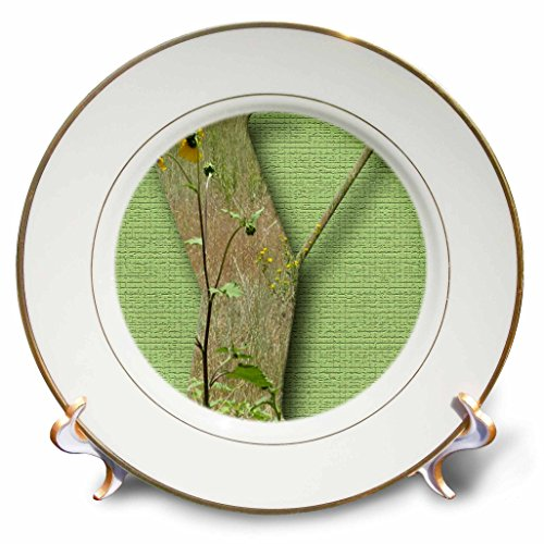 3dRose Jos Fauxtographee- Alphabet Y - Some flowers of yellow on top of the Letter Y on a green backdrop - 8 inch Porcelain Plate (cp_280050_1) (Commemorative Novelty)
