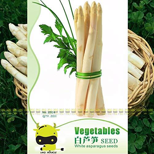 Seeds S Seeds Original Packs Dongshan White Asparagus Seeds, 20 Seeds(1 Original Pack), Low Sugar, Low Fat, Rich in Vitamins Vegetable Seeds