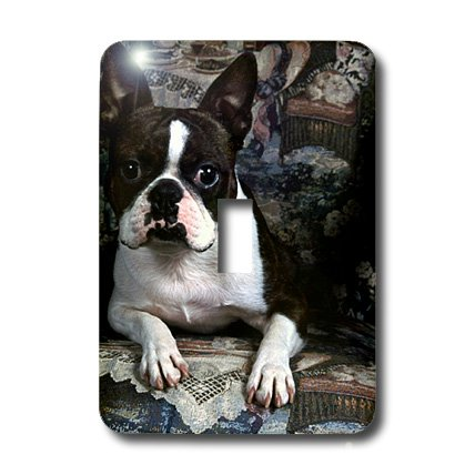 3dRose LLC lsp_3112_1 Boston Terrier Philippe Single Toggle Switch