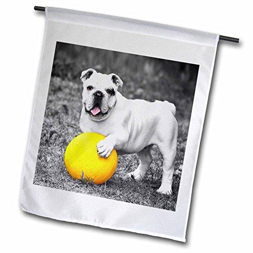 RinaPiro - Dogs - French Bulldog. Playful dog. Cool image. - 12 x 18 inch Garden Flag (Playful Bulldog)