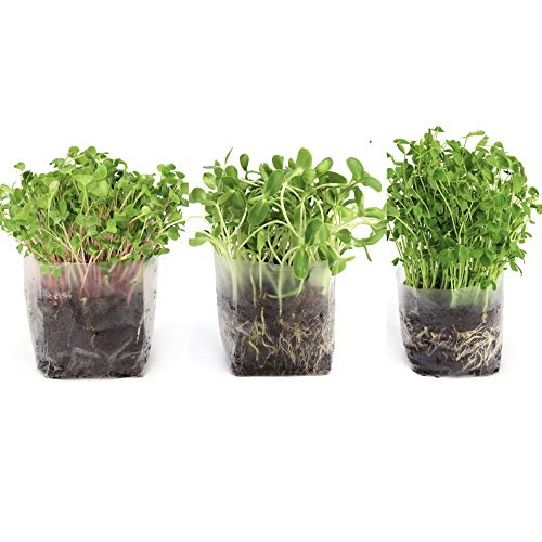 (Pop Up Microgreens Kit (3 Varieties) - Just Add Water and Seed. Perfect Size, a Quick, Smart, Nutritious Meal. Includes Fiber Soil in a Bag, Radish, Sunflower, Pea Shoot Seed. Easy Grow/Delicious.)