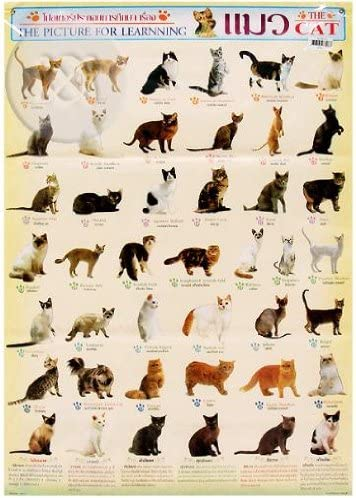 The World of Cats 120 Cat Breeds Cute Endearing Kids Childrens Poster 36x24 Inch